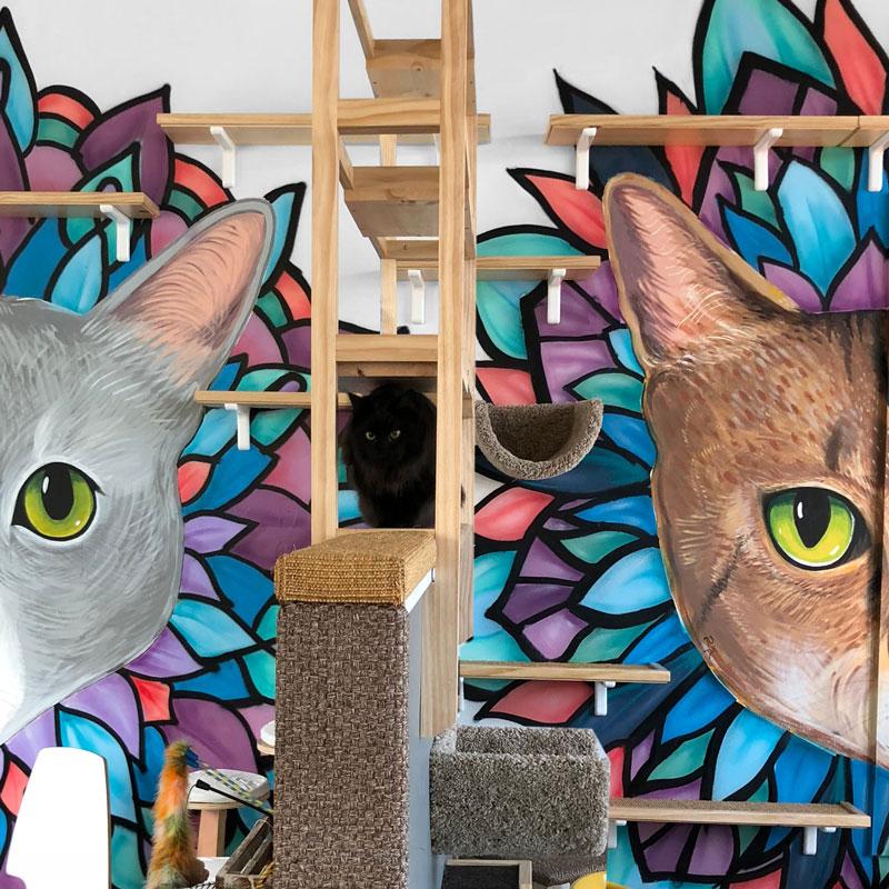 The cat lounge at Java Cats Café Meowietta.